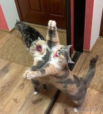 20 рисунков по смешным мемам с котами, которые рассмешили весь интернет, а теперь и вас