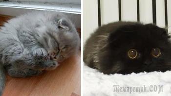 Несколько самых красивых котят