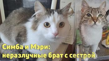 Котята-подростки братик и сестричка нуждаются в доме!