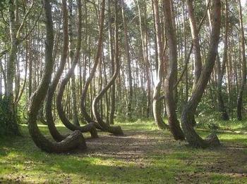 10 самых необычных и удивительных лесов планеты