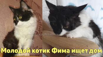Ласковый котик-подросток в поисках любящего хозяина, Луганская область
