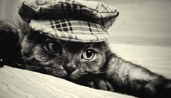 Правила дорожного движения и кошки
