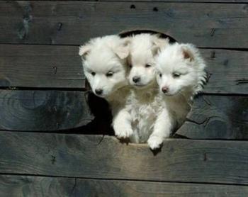 Милые щенки, которые вызовут вашу улыбку