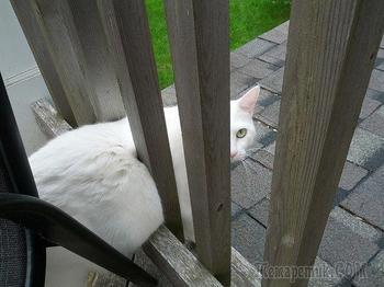 22 глупые кошки, попавшие в смешные и нелепые ситуации