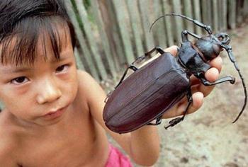Огромнейшие жуки нашей планеты, которые напугают кого угодно