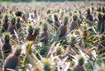 Как выглядят популярные продукты до сбора урожая
