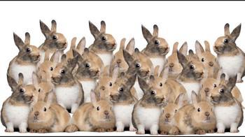 Найдите кошку, которая спрятана среди группы кроликов!