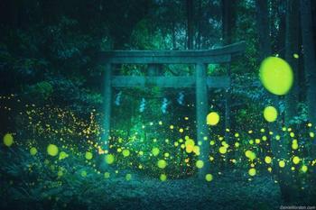 Российский пейзажный фотограф сделал волшебные фотографии светлячков, освещающих японский лес