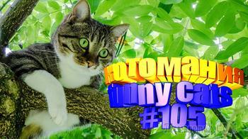 Смешные коты | Приколы с котами | Видео про котов | Котомания #105