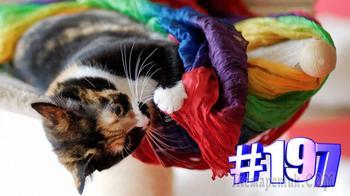 Смешные коты | Приколы с котами | Видео про котов | Котомания # 197