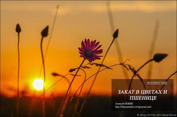 Фотопрогулки .  Закат в цветах и пшенице