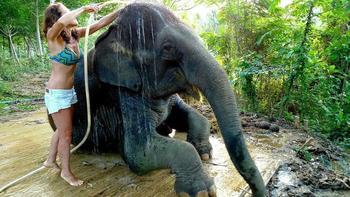 Как научиться мыть слона