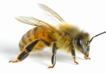 Симптомы и лечение аллергии на укусы насекомых у детей