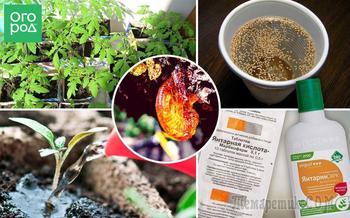 Янтарная кислота – польза для растений и инструкция по применению препарата