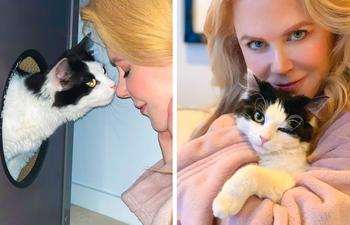 Котики, которые любезно позволяют почесать пузико своим знаменитым на весь мир хозяевам