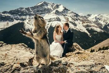 Эти 20 свадебных фотографий были зафотобомблены так хорошо, что мы не можем перестать смеяться
