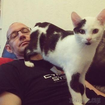 Ситуации, которые поймут только те, у кого есть кот