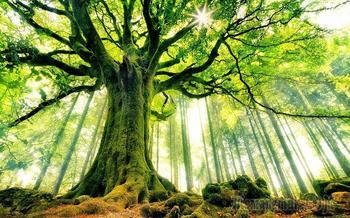 Коллекция обоев c деревьями - 35 вдохновляющих картин