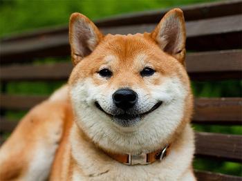 «Собаки-улыбаки». Жизнь любит тех, кто ей улыбается