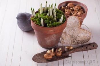 Как размножить луковичные растения в августе-сентябре