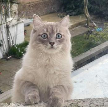 Люди пришли домой, а там кот, хотя раньше кота у них не было