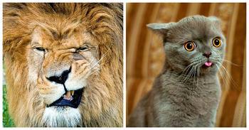 Животные, которые не были готовы к фотосессии
