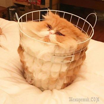 Смешные фотографии кошек доказывающие, что они жидкие