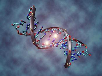 Интересная генетика: 14 любопытных фактов о ДНК