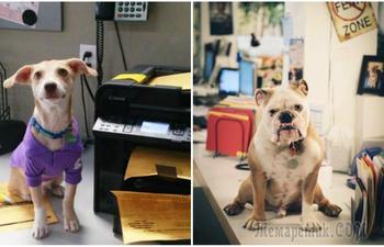 20 смешных фотографий, доказывающих, что собаки - отличные сотрудники