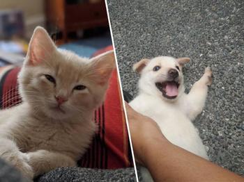Собаки и кошки, которые, наконец, нашли свой новый дом