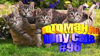 Смешные коты | Приколы с котами | Видео про котов | Котомания #96