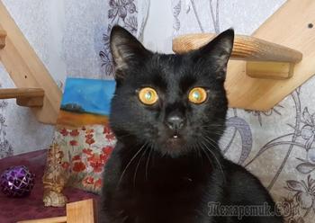 Красивый котенок с абрикосовыми глазами ищет дом