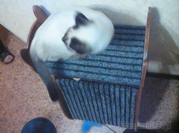 Когтеточка для кота в виде кота