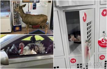 17 неожиданных снимков животных, которые попали в кадр совершенно из ниоткуда