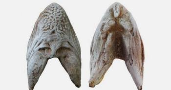 ТОП-10: Удивительные окаменелости, обнаруженные в пустыне Сахара