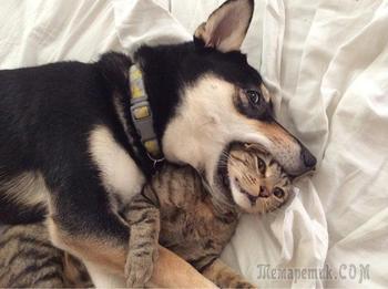 25 прекрасных примеров дружбы между животными