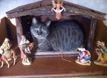 20 смешных сердитых котов, разрушивших рождественские инсталляции