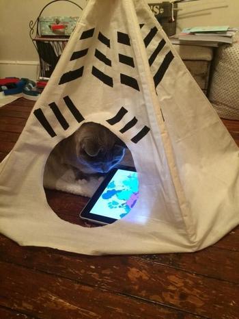 20 испорченных кошек, живущих роскошной жизнью