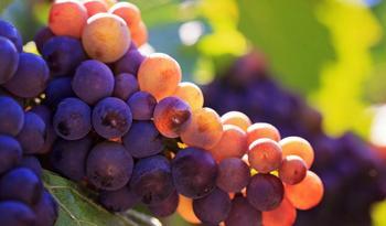 Как прищипывать виноград