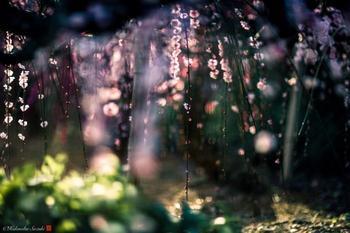 Долгожданная весна: 12 колоритных снимков цветения сакуры