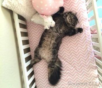 Кошки - хозяева в доме!