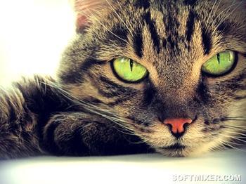 Великая Тайна кошек