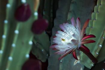 Флуоресцирующие растения в фотографиях Крейга Бэрроуза
