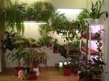 10 домашних цветов мужегонов и как они выглядят