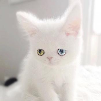 Котенок с гетерохромией восхитил сеть красотой своих глаз