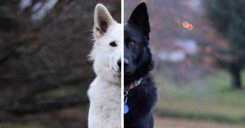 Собаки, олицетворяющие день и ночь