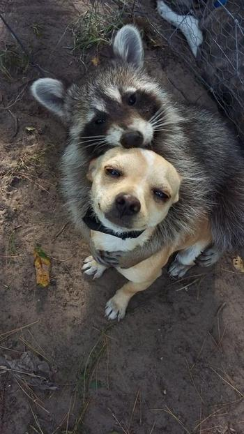 Примеры бескорыстной и крепкой дружбы между разными животными