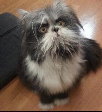 Это странное животное не дает спать пользователям Интернета, кто же это – кот или пес?
