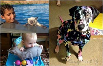 Смешные фотографии о нелегкой жизни животных в домах где есть дети