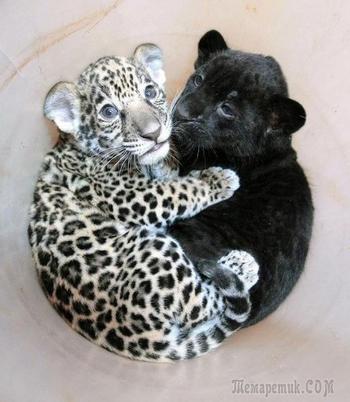 Подборка самых очаровательных детёнышей диких животных. Милота